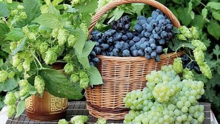 Виноград. Полезные свойства и способы лечения