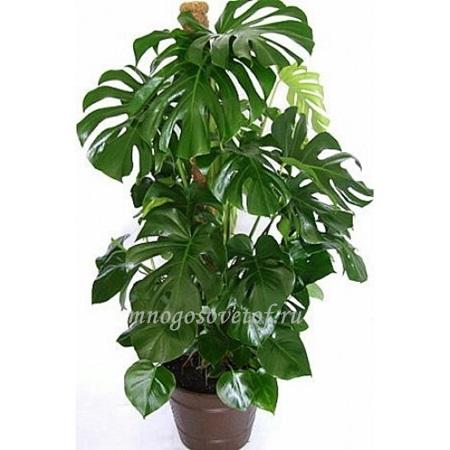 Какие комнатные растения нельзя держать дома?