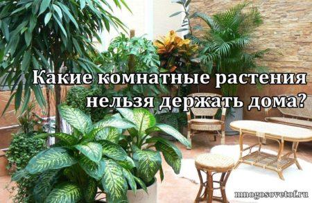 Какие комнатные растения нельзя держать дома? (+видео)