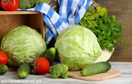 Болит горло- ешьте тушеную капусту